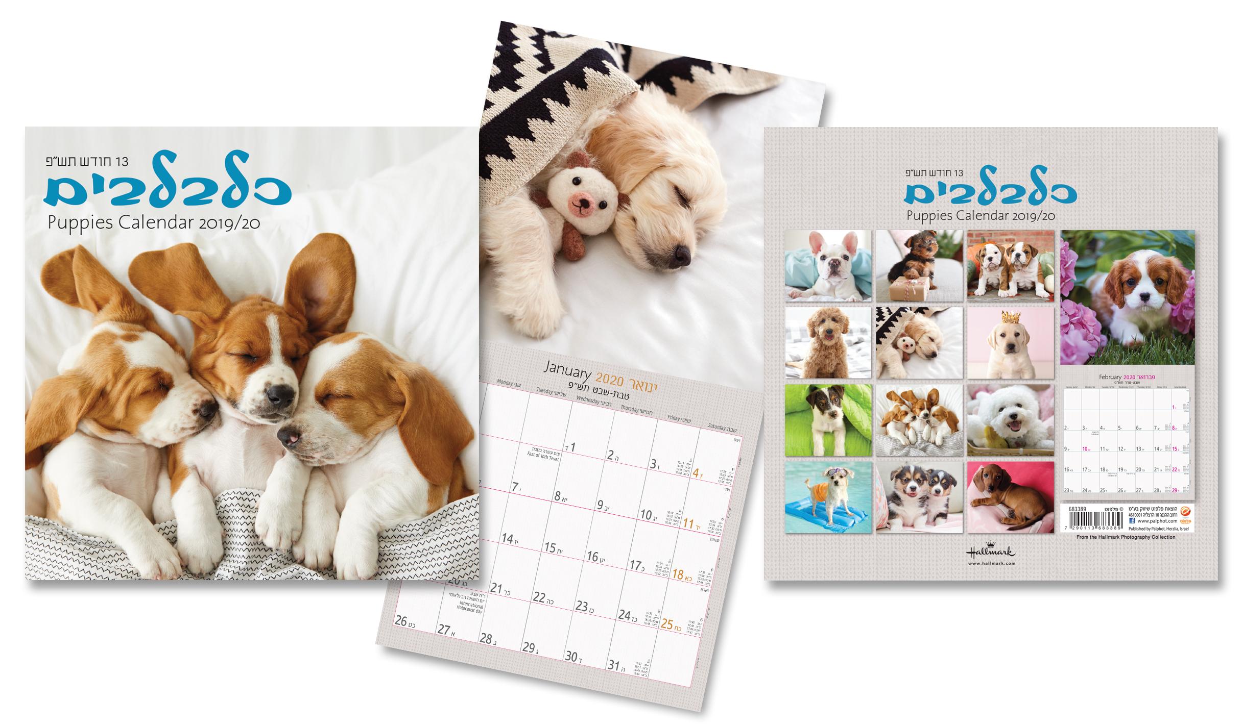 Buy Small Kittens Calendar Jewish Year 5780 [Sept 2019