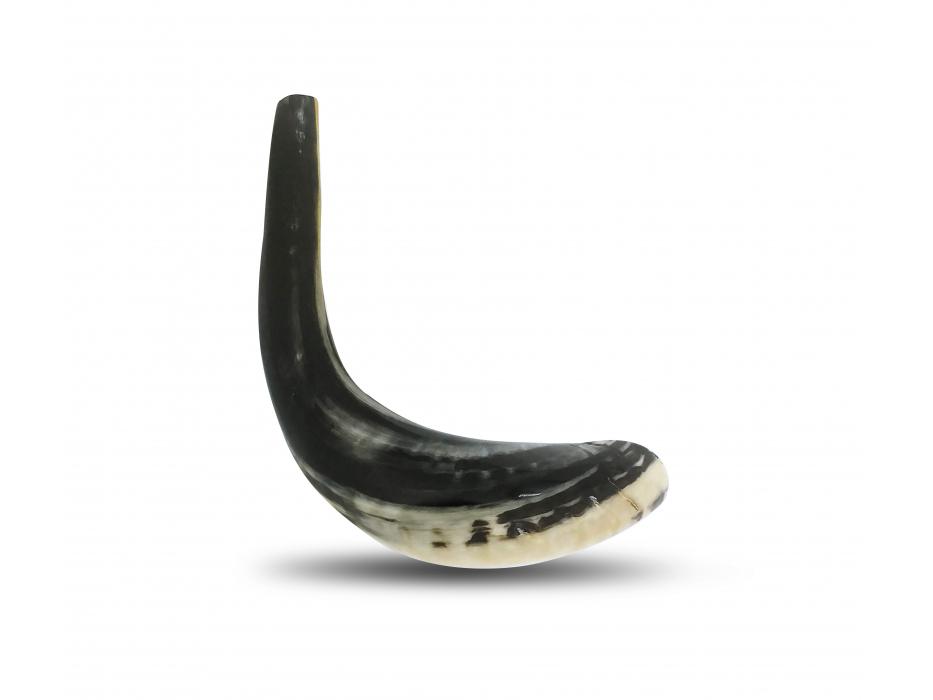 Grey Classic Ram's Horn Shofar (11-13 inch) Polished