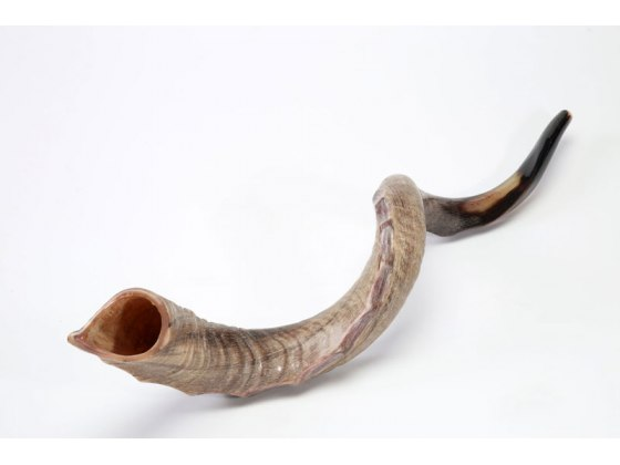 4XL Yemenite Shofar Horn (44-47 inch)