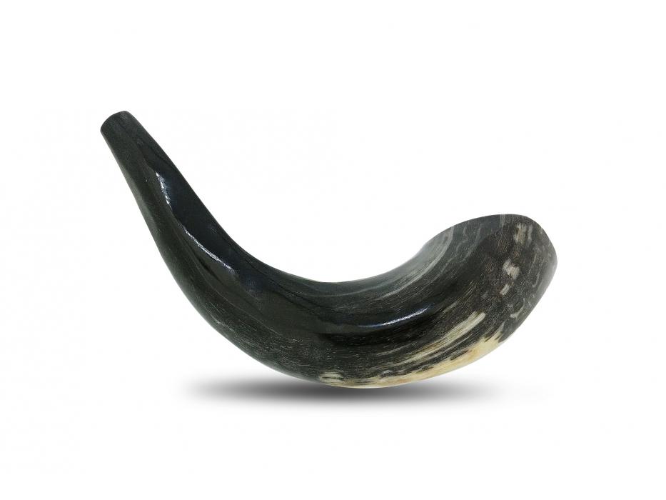 Grey Small Ram's Horn Shofar (8-10 inch)