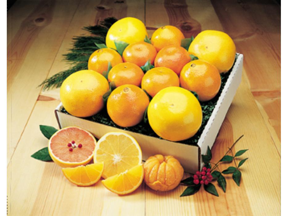 Gift Basket of Israeli Citrus fruits - Oranges