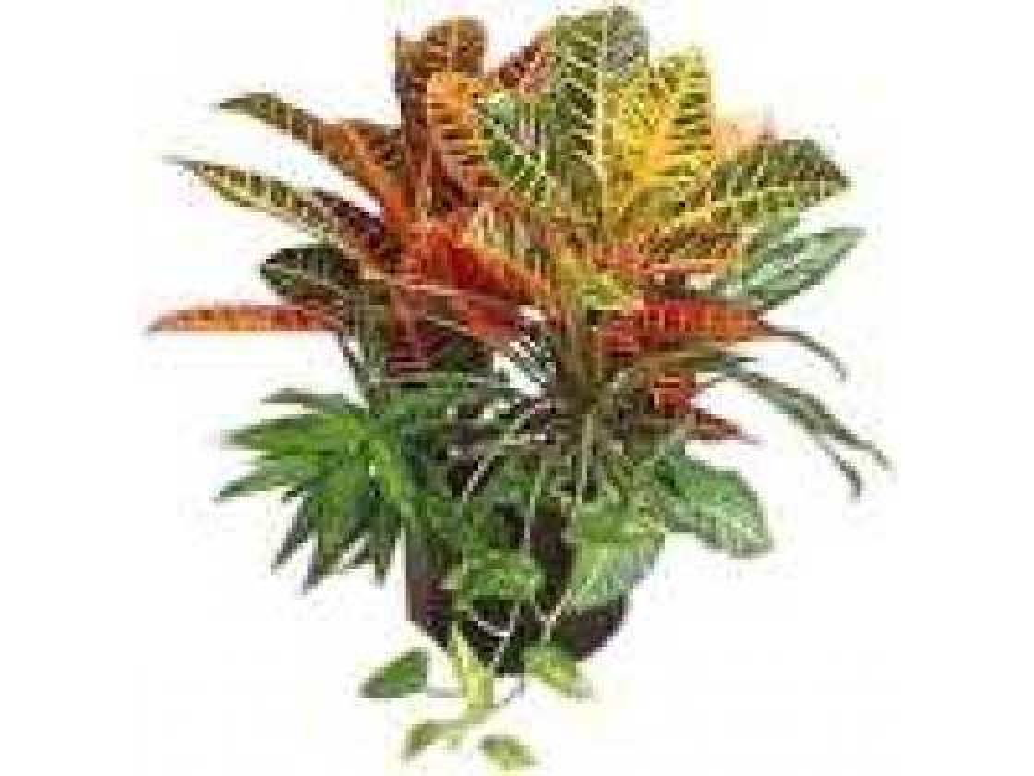 Plant Arrangement - Regular (Israel)