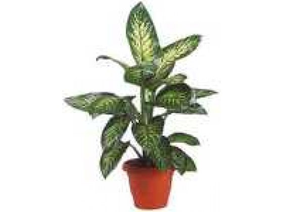 Potted Plant - Big (Israel)