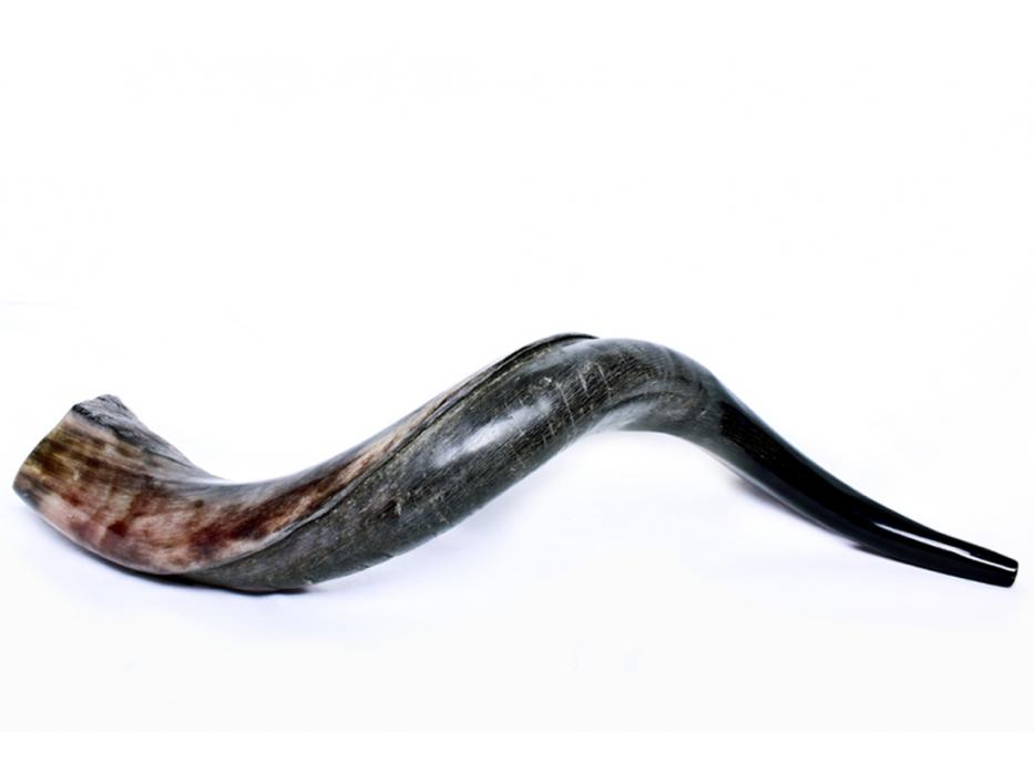 Small Yemenite Shofar Horn