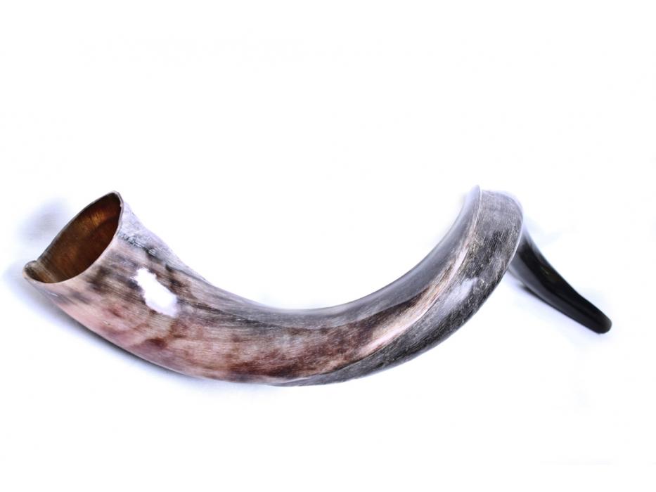 XXLarge Yemenite Shofar Horn (37.8-43 inch) - Polished