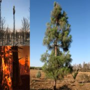 Plant A Trees Of Life on the Carmel: Help Reforest Israel