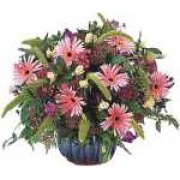 Season's Bouquet - Giant (Israel)