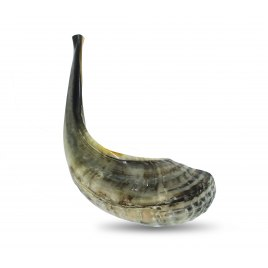 Large Ram's Horn Shofar (16-17.7 inch)